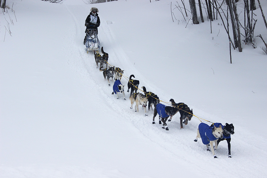 The UP200 & Midnight Run Sled Dog Race | Lancaster Puppies