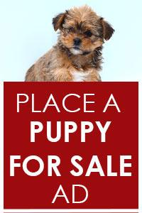 Place a Puppy for Sale Ad