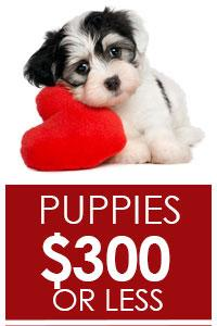 Puppies $500 or Less