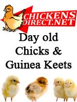 Chickens for Sale Online