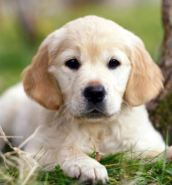 Vernon Zimmerman | Lancaster Puppies