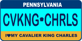 Cavalier King Charles Spaniel License Plate