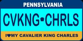 Cavalier King Charles Spaniel License Plate