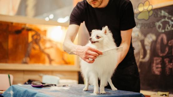 man grooming white dog
