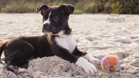 black and white puppy on beach