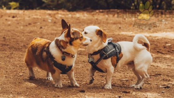 Two dogs sniffing each other at a dog park