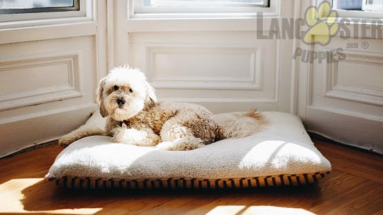 fluffy white dog on dog bed