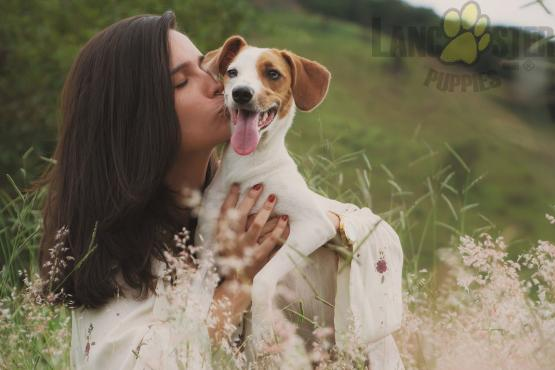 puppy and woman hug