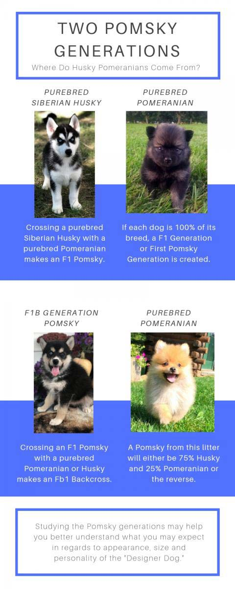 Pomsky generations