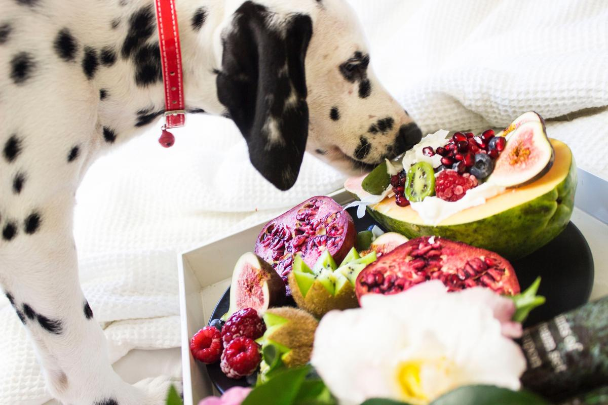 dalmatian eating fruits
